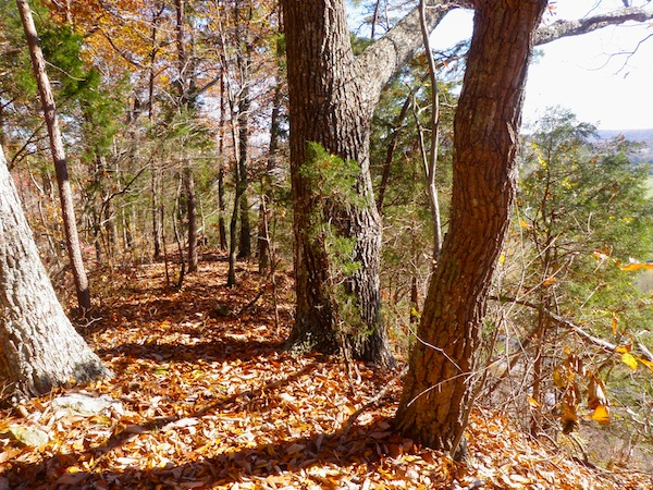 Oak and Hickory Leaves Cover the Trail